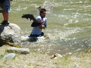 Historic Salmon Release at Duck Valley